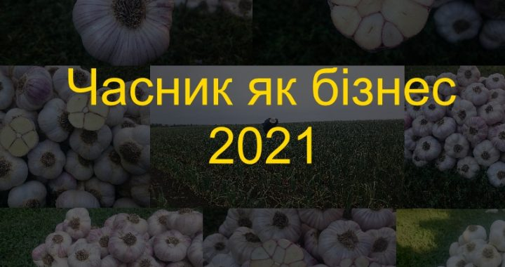 Часник як бізнес 2021
