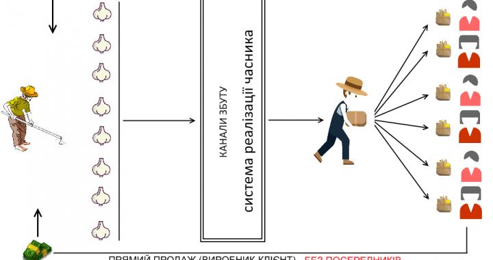 Канал продаж часника. Готова система реалізації часника. Часниковий бізнес.